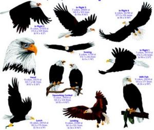 Cactus Punch BRD05 Birds Bald Eagles CD