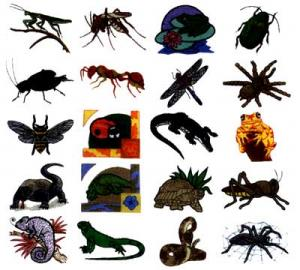 Dakota Collectibles 970026 Creepy Critters Multi-Formatted CD