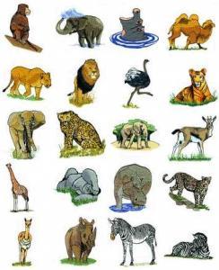 OESD 11288 Safari Embroidery CD Design Pack