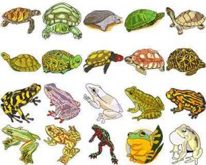 OESD 11323 Frogs and Turtles Embroidery CD Design Pack