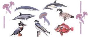 Balboa Threadworks 64U Fish and Birds 4 4x4 Embroidery Disks