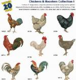 Amazing Designs AD 1218 Chickens & Roosters I Embroidery Disks