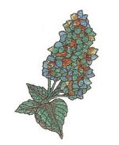 Great Notions 1489, 20 Amazing Wall Flower Embroidery Designs I CD