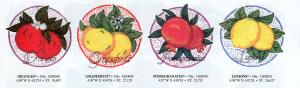 Dakota Collectibles SMX13 Fruits & Berries Large Designs Multi-Formatted CD