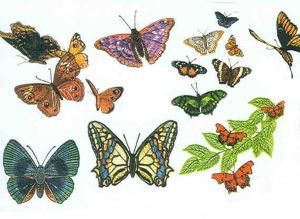 Babylock BLDP P17 Butterflies Abound  CD