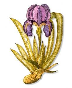 Dalco Floral Collection Applique Designs