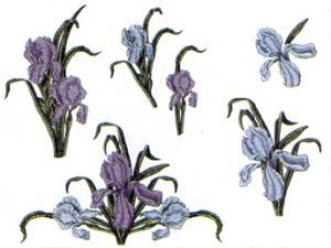 Balboa Threadworks 66J Iris Floral Collection 1 4x4 Embroidery Disks
