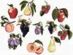 Balboa Threadworks 77N Fruit Collection 1 5x7 Embroidery Disks